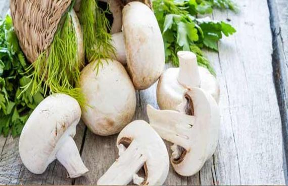 Eating Mushrooms Cuts Prostate Cancer Risk: Study