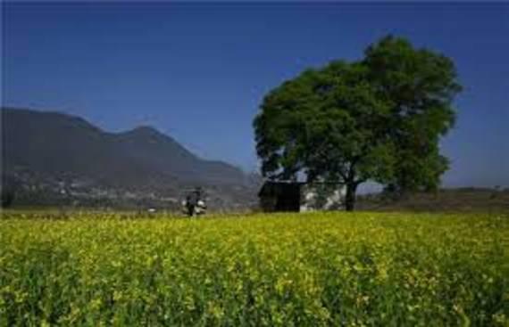 Rural consumption grew in Apr-Jun, albeit slowly: Report