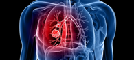 Scientists Use Stem Cells To Grow 3D Lung