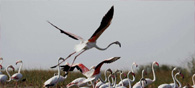 India's Bird Habitats In Serious Danger: Study