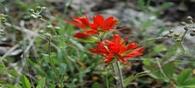 IISc database on peninsular Indian flora