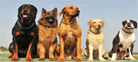 9 Most Popular Dog Breeds in the World