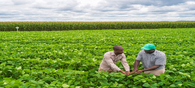 Productive Crop Management Strategies to Expand