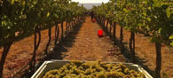 A Magnificent Trip to the Wine Yards of Garden