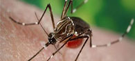 7 Facts about Zika Virus That You Need to Know