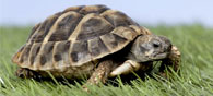 New Tech Lets Humans Control Turtles With Thought