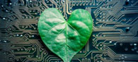 Tree-On-A-Chip Device May Help Power Robots