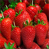 Strawberries Cut Cardiac Risk in Women