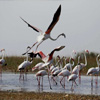 India's 10 Famous Bird Habitats In Serious Danger, Says Study