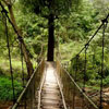 Coorg: An Experience Unlike Any