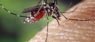 3D Antibody Arrays Could Help Diagnose Malaria, TB