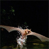 Bats May Help Bolster Radar Technology