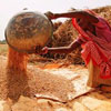 India's 2015-16 Wheat Output May Surpass Last Year's Level