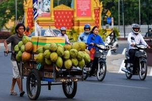 Niu Neer coconut delivery app to serve coconut water