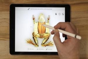Indian 'Froggipedia' becomes iPad App of Year: Apple