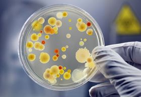 Enzyme discovery could help in fight against TB