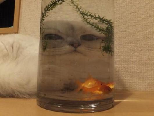 I Am Watching You