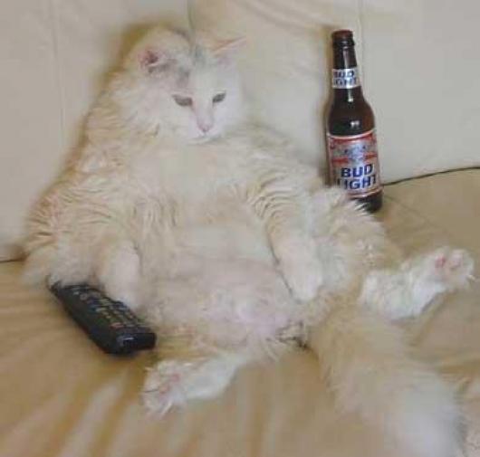 Funny Bachelor Cat