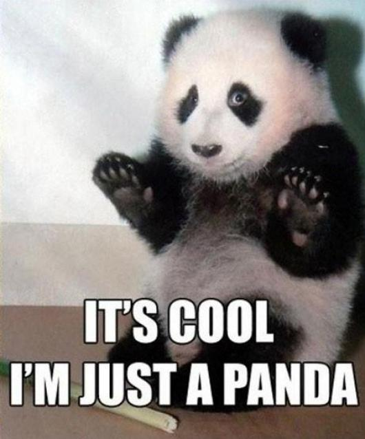 I'm A Panda