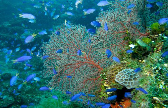 AI identifies microscopic marine organisms: Study