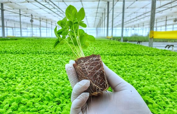 AI could play key role in India's growth in agriculture