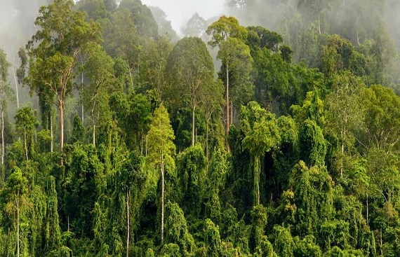 Learn More About Green Malay Benefits, Facts & Side Effects
