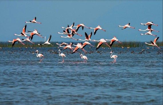 India's Top 5 Destination for Migrants Birds