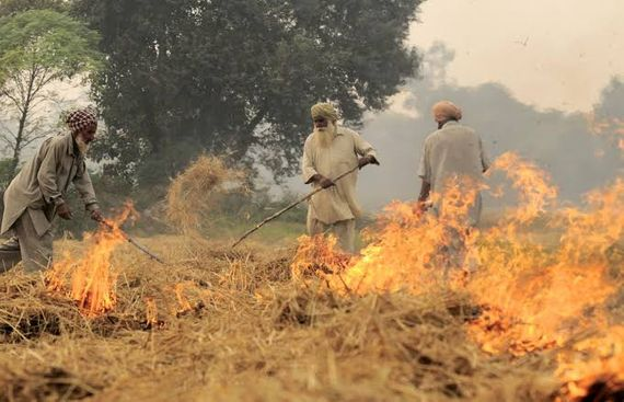 Hinduja Group offers to lift paddy stubble from Punjab