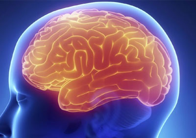 Multiregional Brain-On-A-Chip To Study Disorders Developed