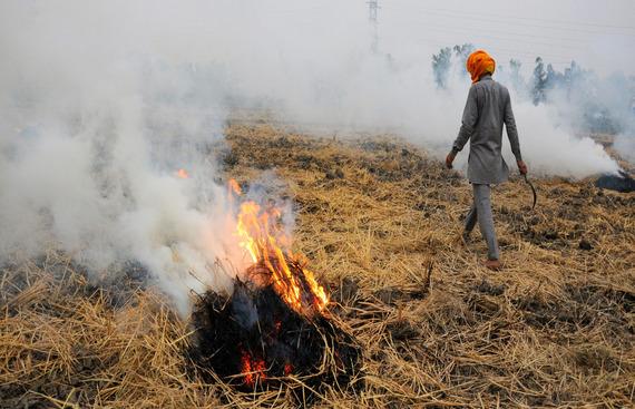 NTPC invites bids for biomass pellet procurement