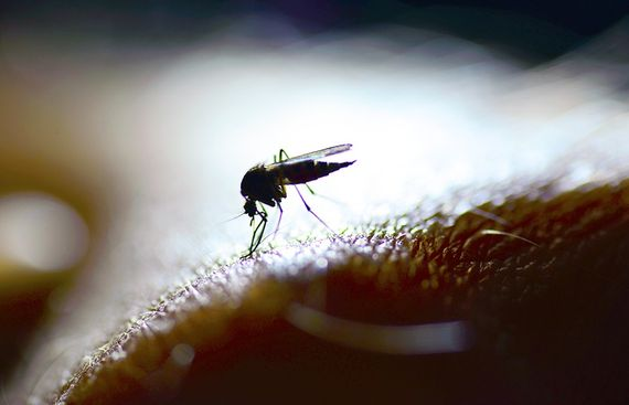 New experimental vaccine offers hope against malaria