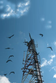 impact-of-mobile-towers_2.jpg