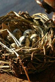 incubation center, nest, startup