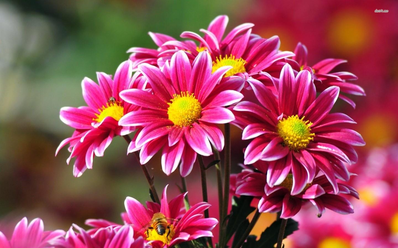 5 Long Lasting Cut Flowers