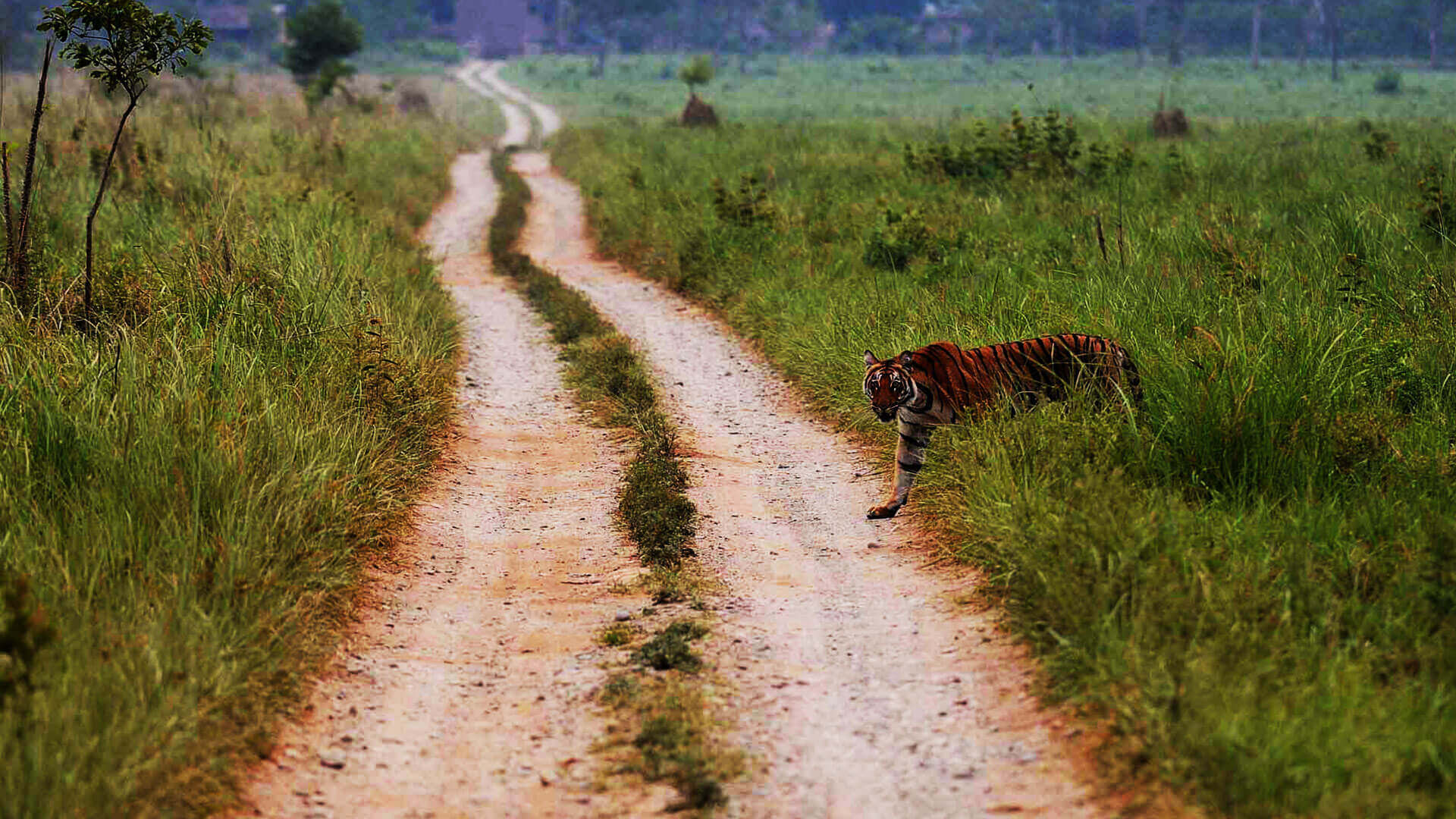Jim Corbett National Park - A Refreshing Travel Getaway