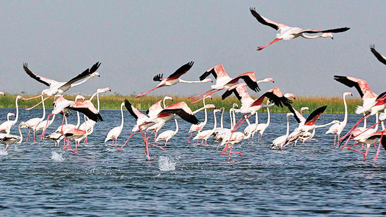 Nalsarovar Bird Sanctury