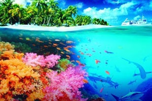 Most Beautiful Coral Reefs In The World - Page 3  Most Beautiful ...