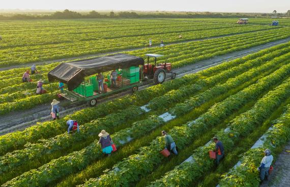 Farm Bills 2020: Will Agricultural Reform Bear Fruit?