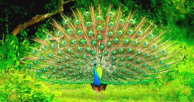 Best Wildlife National Parks In Sri Lanka