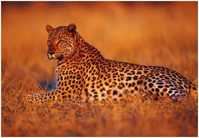 wildlife sanctuary in karnataka