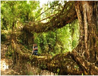 Living Root Bridge/ Double Decker Root Bridge Cherrapunji