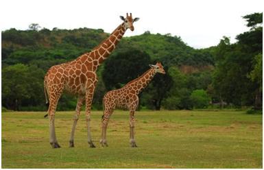 wildlife india tourist spot