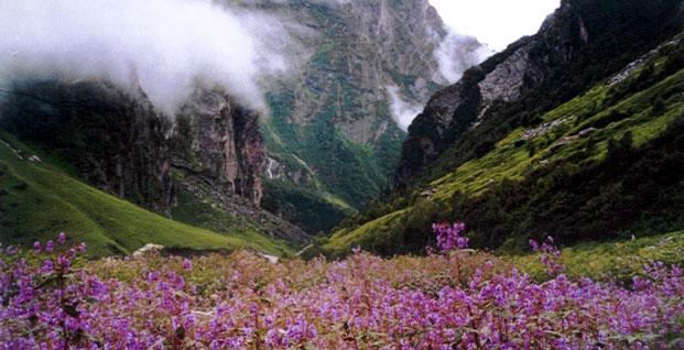 valley of flowers uttarakhand