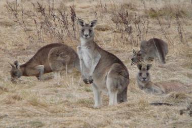 Australias Plants & Animals