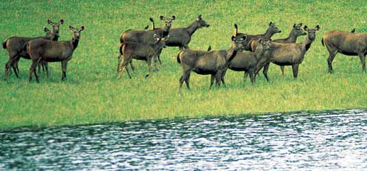 Bandipur National Park , Karnataka