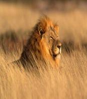 Namdapha Wildlife Sanctuary
