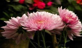 Blossom International Park
