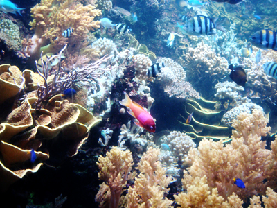 real underwater world. Perfect World To Real Underwater World N