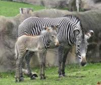 Pt. GB Pant High Altitude Zoo