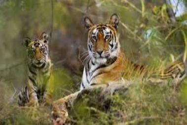 Parambikulam Wildlife sanctuary Palakkad Kerala